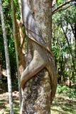 Erotiskt träd 1 arkivbild