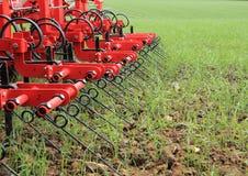 Erpice nel campo del raccolto verde dopo piovosità Immagine Stock Libera da Diritti