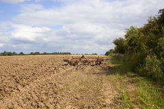 Erpici e suolo dell'aratro Fotografia Stock Libera da Diritti