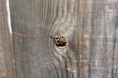 Erradicación de la abeja Imagen de archivo