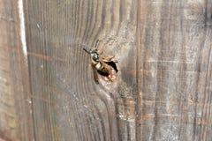 Erradicación de la abeja Fotos de archivo libres de regalías