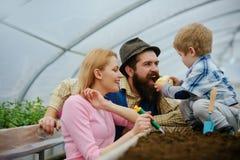 errichten Familie, die im Gewächshaus pflanzt Pflanzen von Blumen in der Orangerie Muttervater und -sohn, die im Bauernhof pflanz stockbild