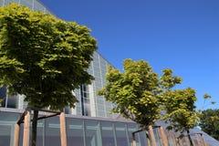 Errichten und grüner Baum Stockfotografie