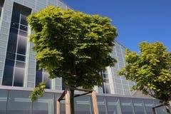 Errichten und grüner Baum Lizenzfreie Stockfotos