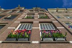 Errichtendes Äußeres mit großen Fenstern und blühenden Tulpen im Blumentopf Stockfotos