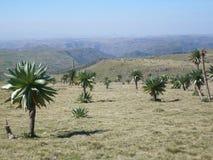 Errie skönhet i Etiopien Arkivfoton