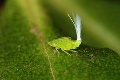 Erro ótico da fibra do inseto estranho Imagens de Stock