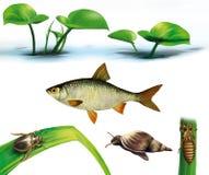 Erro de água, caracol, libélula, larvas, peixes do gobião ilustração do vetor