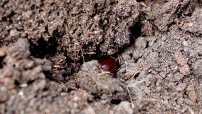 Erro do besouro nave no jardim video estoque