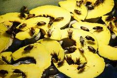 Erro do grilo na ab?bora para o alimento fritado, popular da rua do petisco em Tail?ndia imagem de stock royalty free