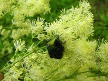 Erro em uma flor. fotografia de stock