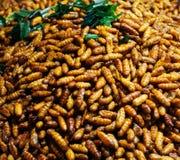 Erro fritado em um alimento repugnante da rua do petisco dos insetos da bandeja fotografia de stock