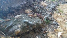 Erro pequeno que anda em pedras e em folhas Imagens de Stock