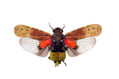 Errore di programma del cicadellide Fotografia Stock Libera da Diritti