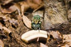 Errore di programma dello scarabeo Fotografia Stock Libera da Diritti
