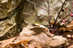 Errore di programma dello scarabeo Fotografie Stock Libere da Diritti