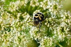 Errore di programma il giorno di fioritura sistema l'estate rurale di sally del fiore del fireweed Immagine Stock
