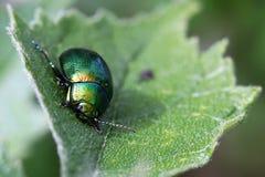 Errore di programma verde fotografia stock