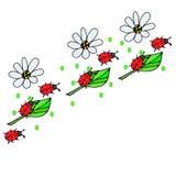 Erros vermelhos em flores Fotos de Stock Royalty Free