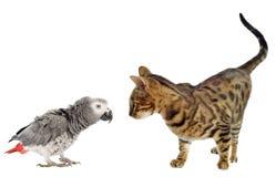 Erschrecken des Papageien und der Katze Lizenzfreies Stockfoto