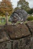 Erschrockene Cat On eine Wand stockbilder