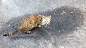 Erschrockene Katze Stockbild
