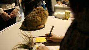 Erschrockene reinrassige Katze, die bei Empfang Tabelle in der Veterinärklinik sitzt stock footage