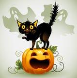 Erschrockene schwarze Katze auf einem Kürbis und einem Geist. Lizenzfreies Stockfoto