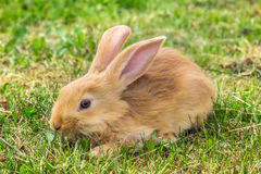 Erschrockener Blick des jungen Kaninchens Lizenzfreie Stockbilder