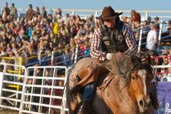 Erschrockener Cowboy - Schwestern, Oregon-Rodeo 2011 Lizenzfreies Stockfoto