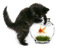 Erschrockener Goldfish, der bald gegessen wird Lizenzfreie Stockbilder
