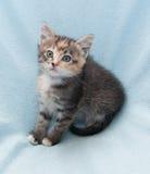 Erschrockenes dreifarbiges Kätzchen Lizenzfreies Stockbild