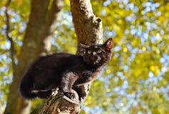 Erschrockenes Kätzchen Lizenzfreie Stockfotografie