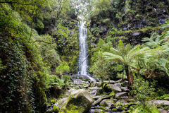 Erskine Falls. Located along the Great Ocean Road, Australia Stock Image