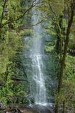 Erskine Falls, Victoria, Austrália fotografia de stock