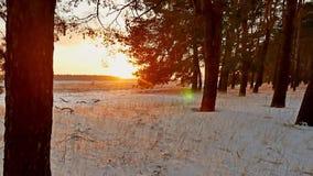 Erstaunliche Abendbewegungs-Winterlandschaft Winterwaldschneesonne des SonnenuntergangWeihnachtsbaums schöne ein greller Glanz stock footage