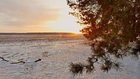 Erstaunliche Abendbewegungs-Winterlandschaft Winterwaldschneesonne des Weihnachtsbaum-Sonnenuntergangs schöne ein greller Glanz stock video
