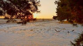 Erstaunliche Abendbewegungs-Winterlandschaft Winterwaldschneesonne des Weihnachtsbaums schöne ein Sonnenuntergang des grellen Gla stock footage