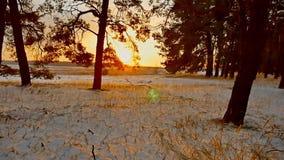 Erstaunliche Abendbewegungs-Winterlandschaft Winterwaldschneesonnenuntergang-Sonnengreller glanz des Weihnachtsbaums schöner stock video