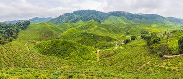 Erstaunliche Ansicht der FAHNE Landschaftsder Teeplantage im Sonnenuntergang, Sonnenaufgangzeit Naturhintergrund mit blauem Himme Lizenzfreies Stockbild