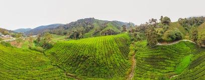 Erstaunliche Ansicht der FAHNE Landschaftsder Teeplantage im Sonnenuntergang, Sonnenaufgangzeit Naturhintergrund mit blauem Himme Lizenzfreie Stockfotos