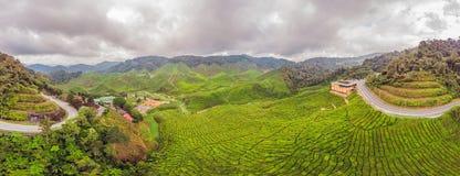 Erstaunliche Ansicht der FAHNE Landschaftsder Teeplantage im Sonnenuntergang, sunri Lizenzfreie Stockfotos