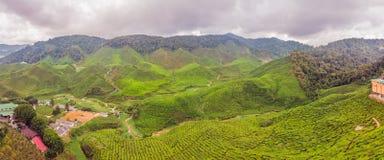 Erstaunliche Ansicht der FAHNE Landschaftsder Teeplantage im Sonnenuntergang, sunri Lizenzfreie Stockbilder