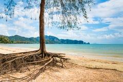 Erstaunliche Ansicht des schönen Strandes mit Baum im Vordergrund Standort Stockfotos