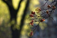 Erstaunliche Ansicht eines blühenden Baums im sonnigen Garten Sonniges nationales Stockfotos