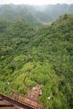 Erstaunliche Ansicht eines Waldes Stockfotografie