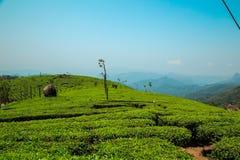 Erstaunliche Ansichten von Teeplantagen in Munnar Stockfoto