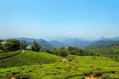 Erstaunliche Ansichten von Teeplantagen in Munnar Lizenzfreie Stockfotografie