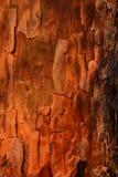Erstaunliche Beschaffenheit der Kiefernbarke, hölzerner Hintergrund Stockfoto