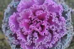 Erstaunliche Blume Stockfotografie